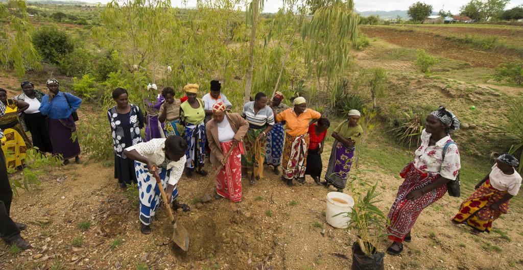 2015 nov Kitui planting demo -6495